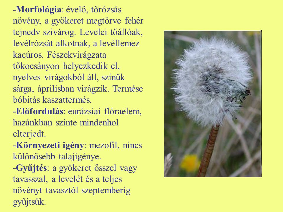-Morfológia: évelő, tőrózsás növény, a gyökeret megtörve fehér tejnedv szivárog. Levelei tőállóak, levélrózsát alkotnak, a levéllemez kacúros. Fészekv