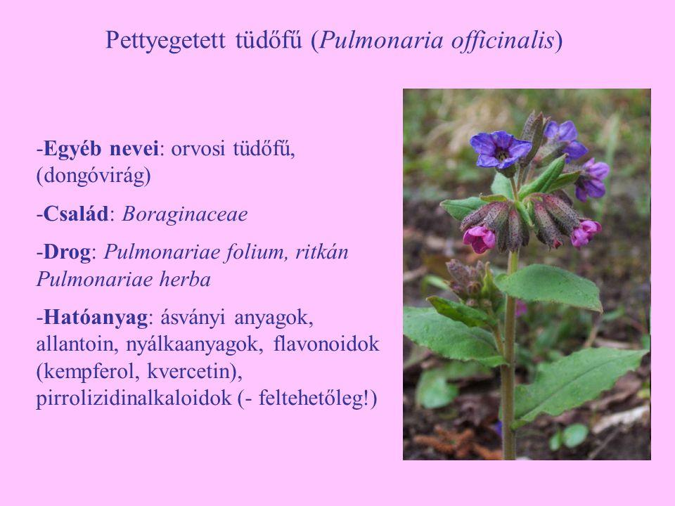 Pettyegetett tüdőfű (Pulmonaria officinalis) -Egyéb nevei: orvosi tüdőfű, (dongóvirág) -Család: Boraginaceae -Drog: Pulmonariae folium, ritkán Pulmonariae herba -Hatóanyag: ásványi anyagok, allantoin, nyálkaanyagok, flavonoidok (kempferol, kvercetin), pirrolizidinalkaloidok (- feltehetőleg!)