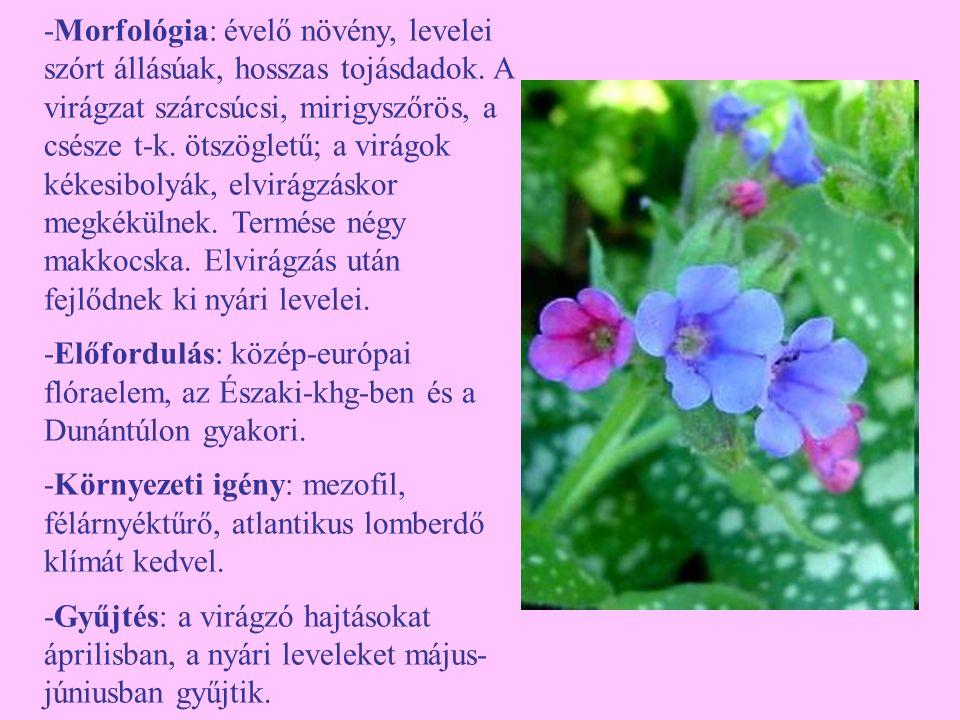 -Morfológia: évelő növény, levelei szórt állásúak, hosszas tojásdadok. A virágzat szárcsúcsi, mirigyszőrös, a csésze t-k. ötszögletű; a virágok kékesi