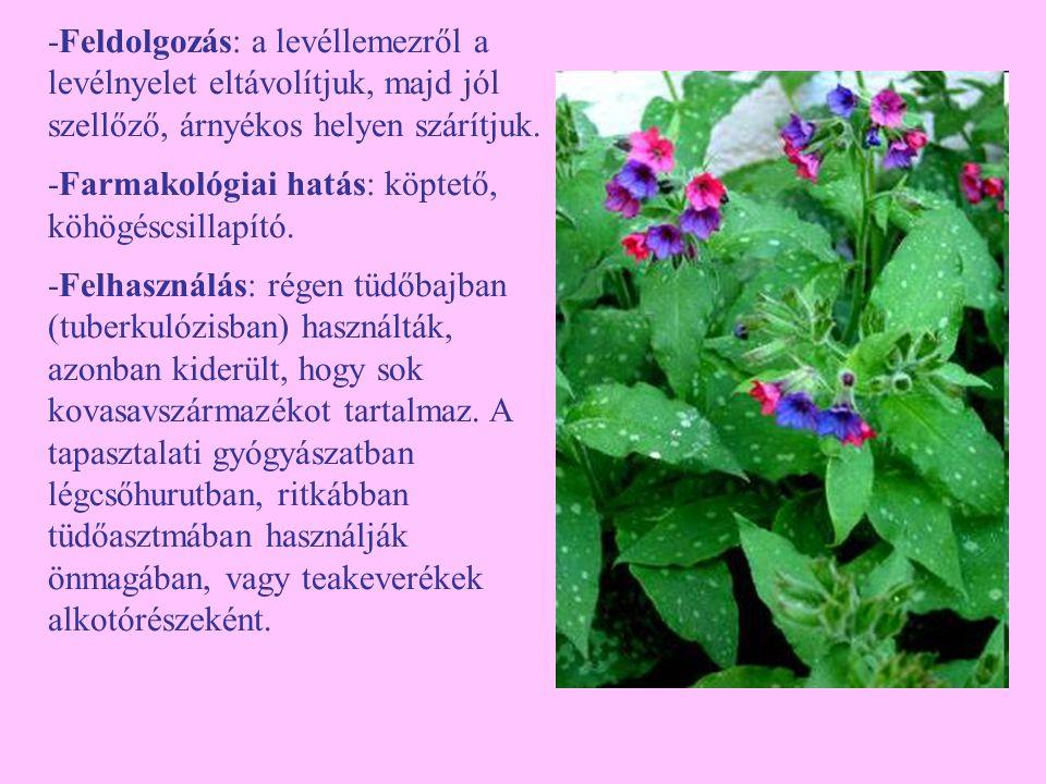 Pongyola pitypang (Taraxacum officinale) -Egyéb nevei: gyermekláncfű, pitypang, kákics -Család: Asteraceae -Drog: Taraxaci radix, Taraxaci folium, Taraxaci herba cum radix -Hatóanyag: triterpén (taraxaszterol), keserűanyaga a laktukapikrin, C-vitamin, A-és B-vitamin, gyökerében szaponin, az egész növény magas káliumtartalmú.