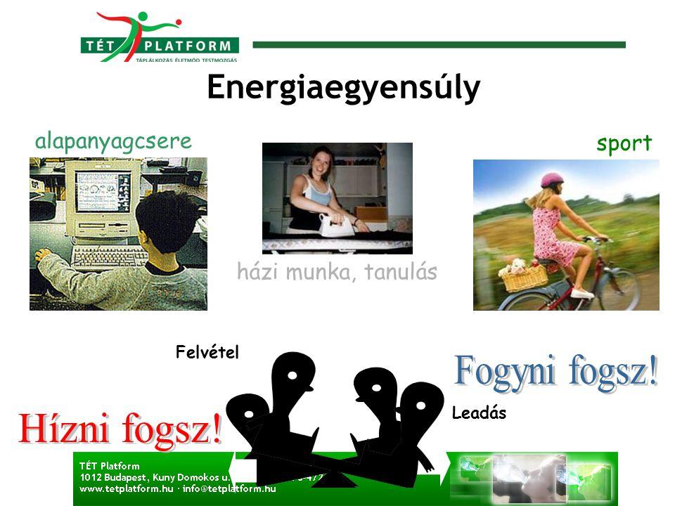 Energiaegyensúly alapanyagcsere házi munka, tanulás sport Felvétel Leadás