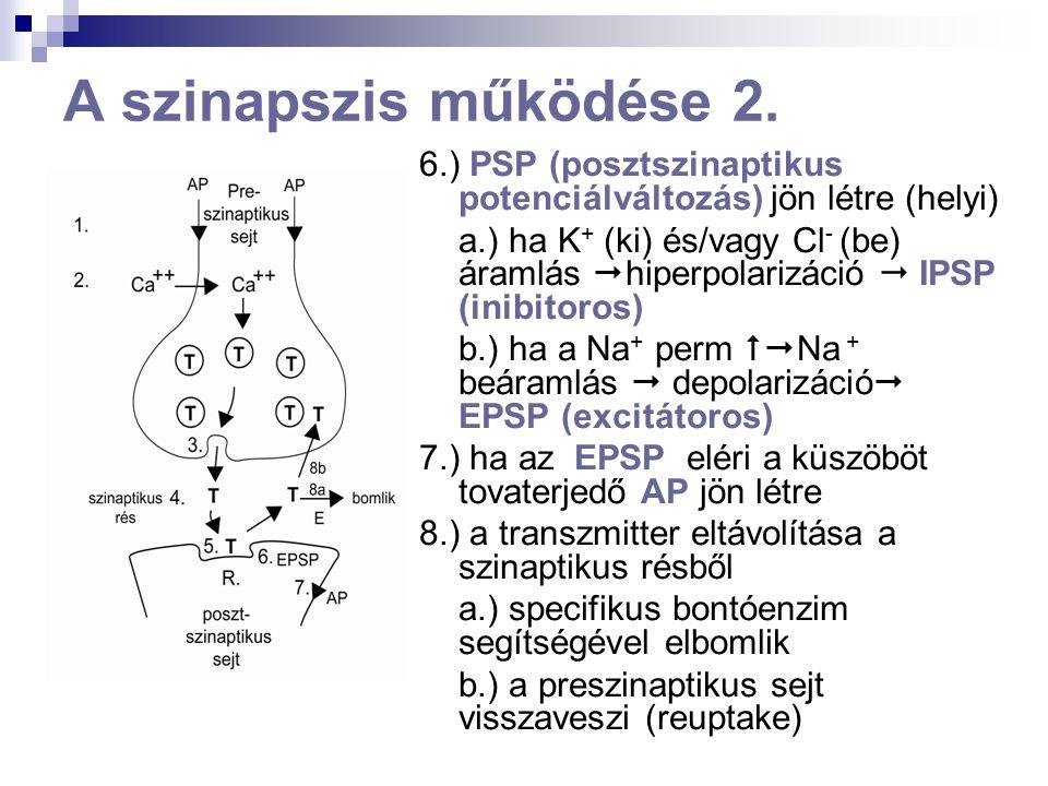 Neuronhálózatok 1. Feed-back