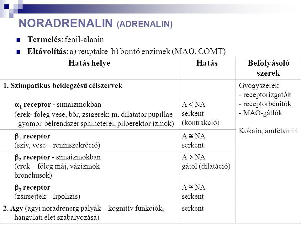 DOPAMIN Termelés: fenil-alanin Eltávolítás: MAO Hatás helyeHatásBefolyásoló szerek Agy (bazális ganglionok, limbikus rendszer) D 1 receptor D 2 receptor serkent gátol SZEROTONIN Termelés: triptofán Eltávolítás: reuptake Hatás helyeHatásBefolyásoló szerek Agy (hypothalamus, limbikus rendszer) serkentSSRI (szelektív szerotonin reuptake inhibitor) szerek Enterális idegrendszer
