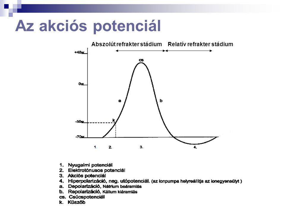 Az ingerület vezetése SZALTATÓRIKUS (ionáramlás csak a Ranvier-befűződéseknél lehetséges!!) az axonokon EGYIRÁNYÚ (a refrakter stádium miatt)