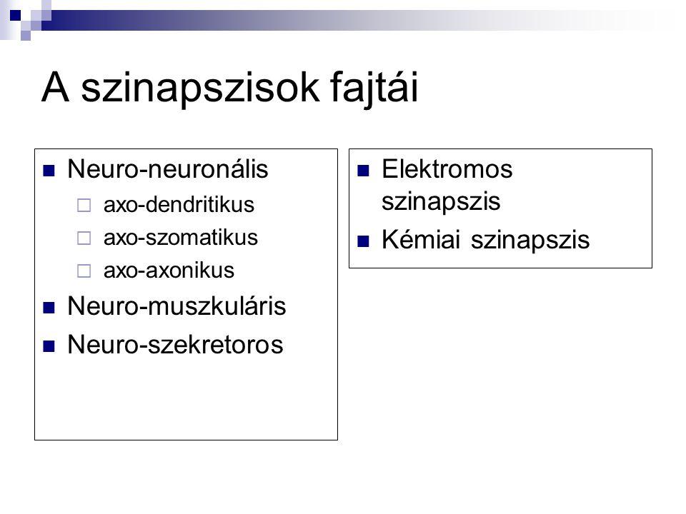 A szinapszisok fajtái Neuro-neuronális  axo-dendritikus  axo-szomatikus  axo-axonikus Neuro-muszkuláris Neuro-szekretoros Elektromos szinapszis Kém