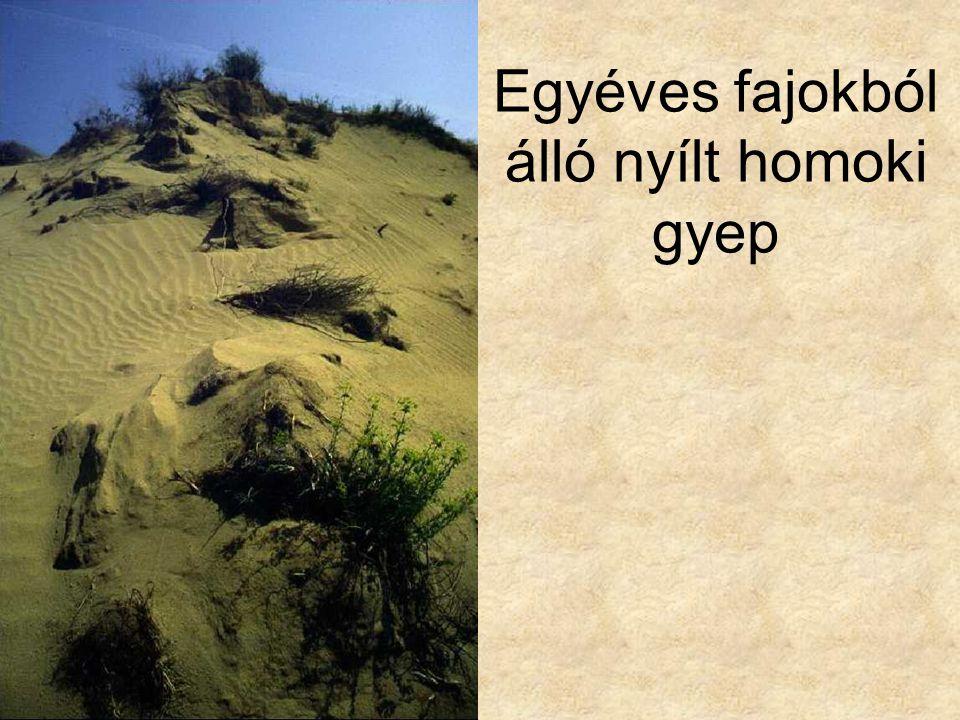 (A homoki szukcesszió zárótársulása:) Zárt homoki tölgyes