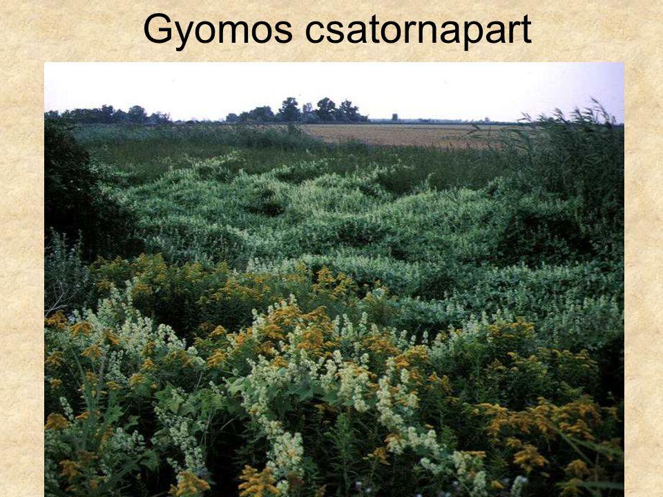 Gyomos csatornapart