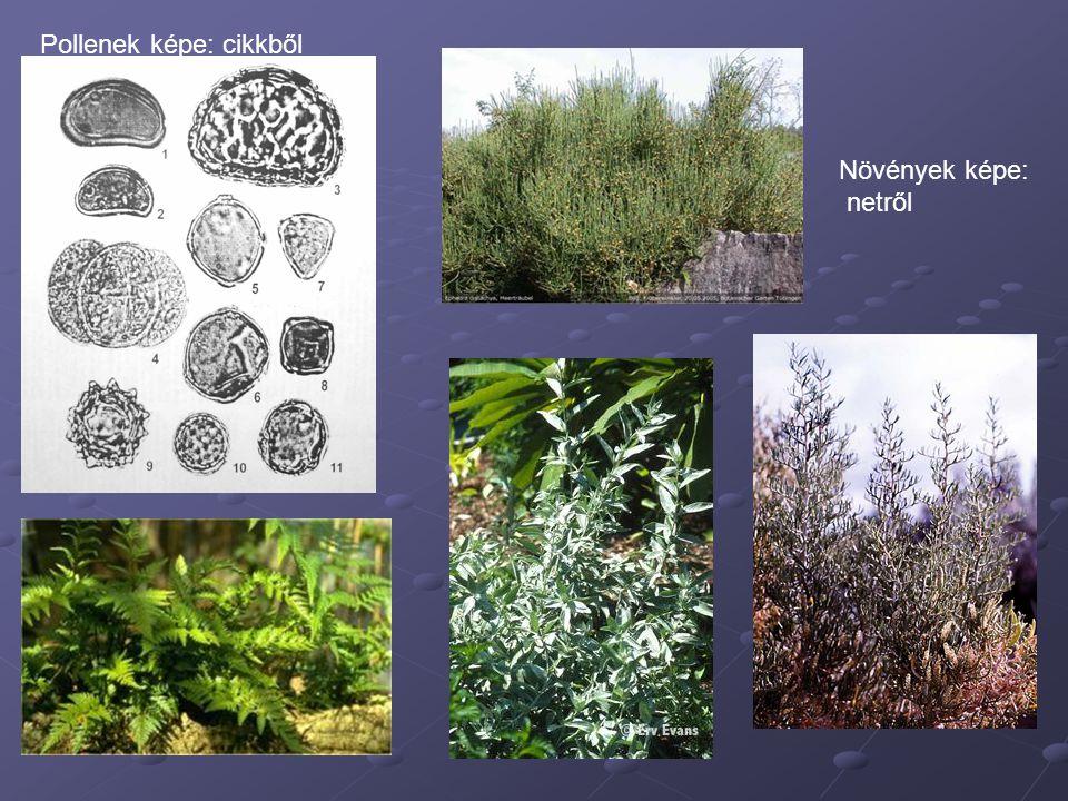 Pollenek képe: cikkből Növények képe: netről