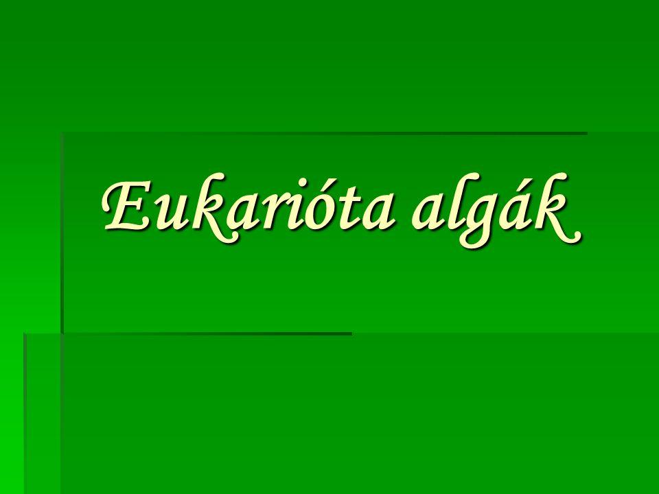 Eukarióta algák