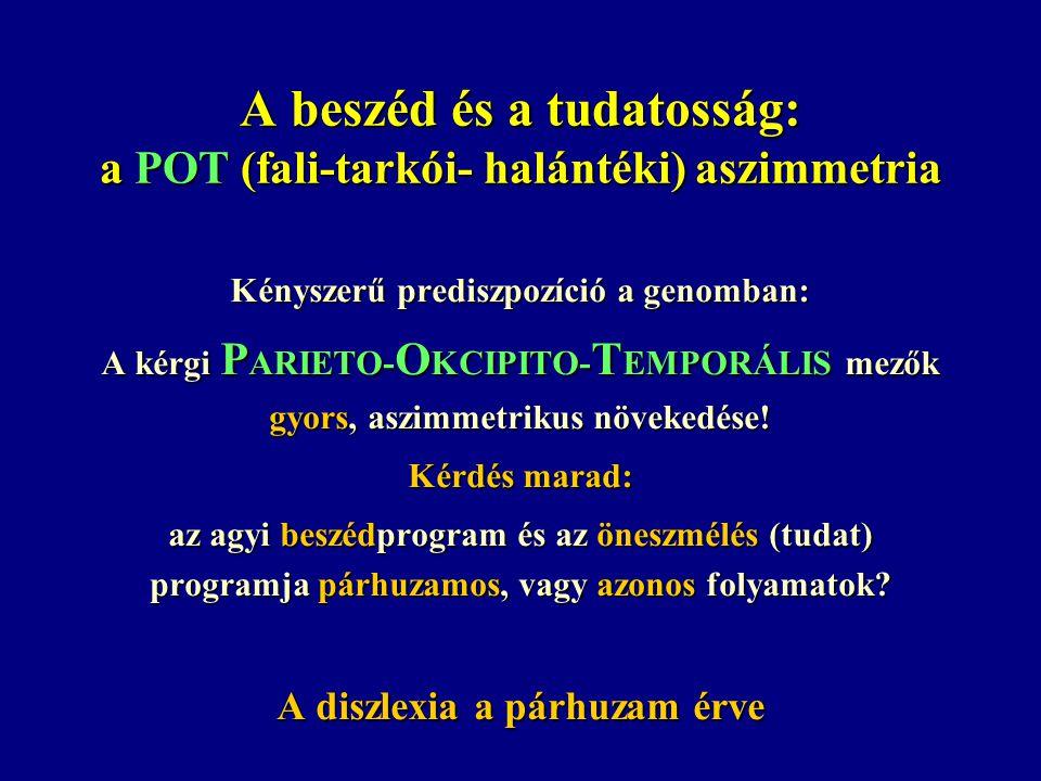 A beszéd és a tudatosság: a POT (fali-tarkói- halántéki) aszimmetria Kényszerű prediszpozíció a genomban: A kérgi P ARIETO- O KCIPITO- T EMPORÁLIS mezők gyors, aszimmetrikus növekedése.