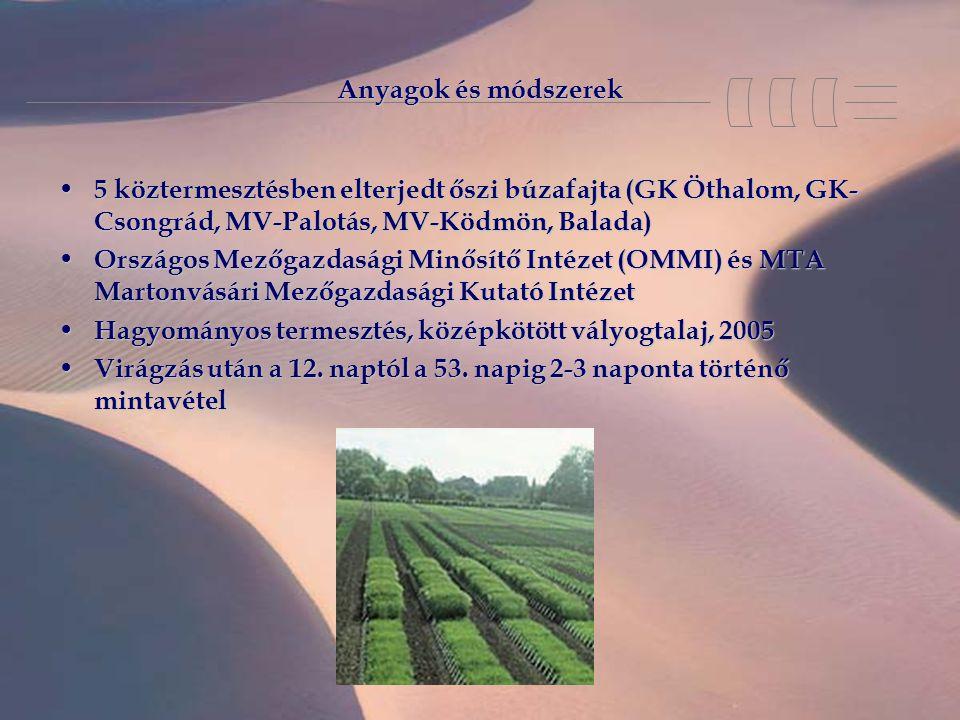 Anyagok és módszerek 5 köztermesztésben elterjedt őszi búzafajta (GK Öthalom, GK- Csongrád, MV-Palotás, MV-Ködmön, Balada) 5 köztermesztésben elterjedt őszi búzafajta (GK Öthalom, GK- Csongrád, MV-Palotás, MV-Ködmön, Balada) Országos Mezőgazdasági Minősítő Intézet (OMMI) és MTA Martonvásári Mezőgazdasági Kutató Intézet Országos Mezőgazdasági Minősítő Intézet (OMMI) és MTA Martonvásári Mezőgazdasági Kutató Intézet Hagyományos termesztés, középkötött vályogtalaj, 2005 Hagyományos termesztés, középkötött vályogtalaj, 2005 Virágzás után a 12.