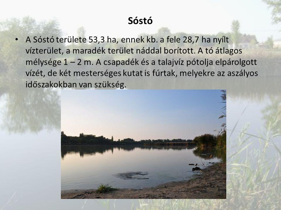 A Sóstó területe 53,3 ha, ennek kb. a fele 28,7 ha nyílt vízterület, a maradék terület náddal borított. A tó átlagos mélysége 1 – 2 m. A csapadék és a