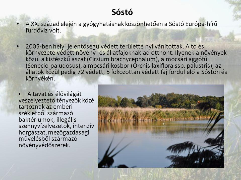 A XX. század elején a gyógyhatásnak köszönhetően a Sóstó Európa-hírű fürdővíz volt. 2005-ben helyi jelentőségű védett területté nyilvánították. A tó é