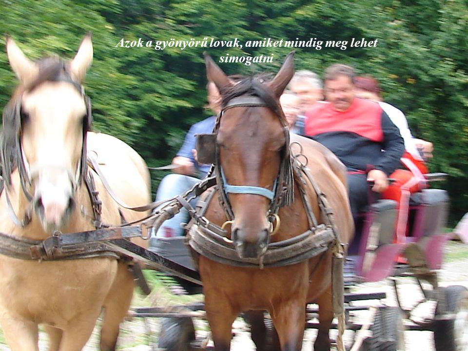 Azok a gyönyörű lovak, amiket mindig meg lehet simogatni