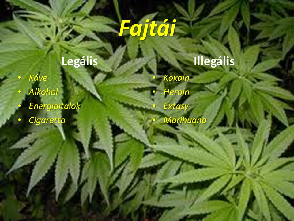Fajtái Legális Kve Káve Alkohol Alkohol Energiaitalok Energiaitalok Cigaretta Cigaretta Illegális Kokain Kokain Heroin Heroin Extasy Extasy Marihuana Marihuana