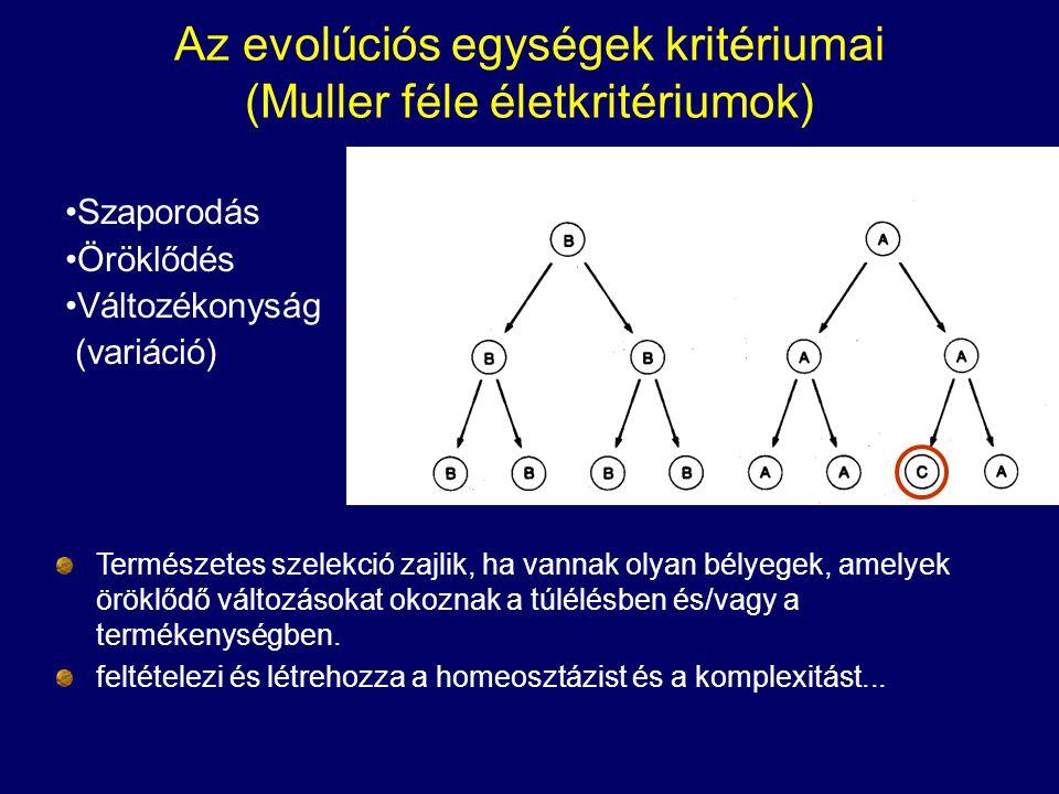 Az evolúciós egységek kritériumai (Muller féle életkritériumok) Szaporodás Öröklődés Változékonyság (variáció) Természetes szelekció zajlik, ha vannak