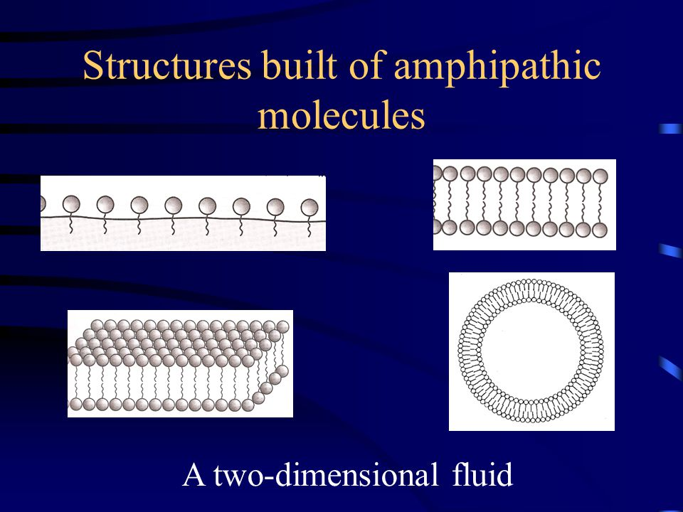 Structures built of amphipathic molecules A two-dimensional fluid