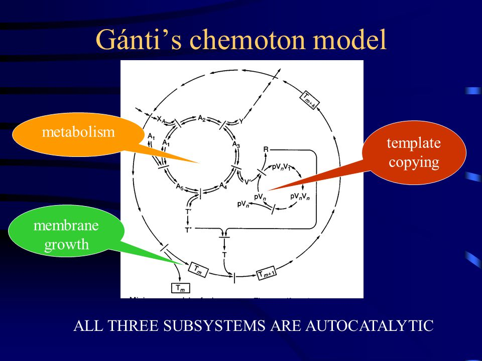 Gánti's chemoton model ALL THREE SUBSYSTEMS ARE AUTOCATALYTIC template copying metabolism membrane growth