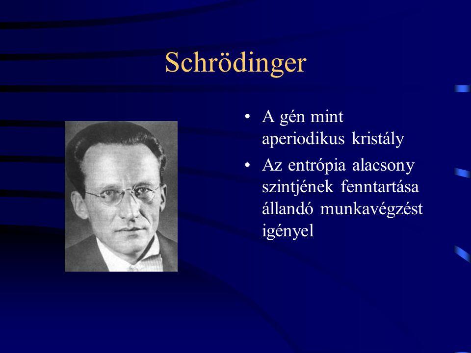 Schrödinger A gén mint aperiodikus kristály Az entrópia alacsony szintjének fenntartása állandó munkavégzést igényel