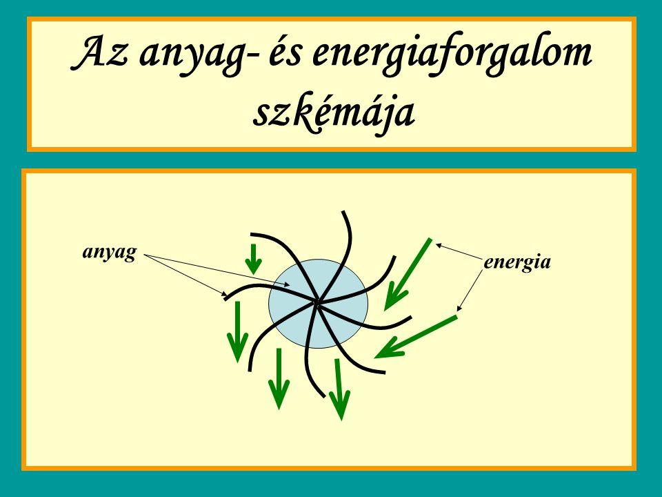 Az anyag- és energiaforgalom szkémája anyag energia