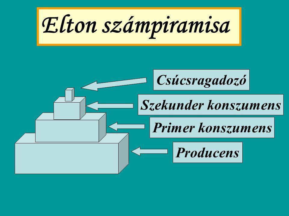 Elton számpiramisa Producens Primer konszumens Szekunder konszumens Csúcsragadozó