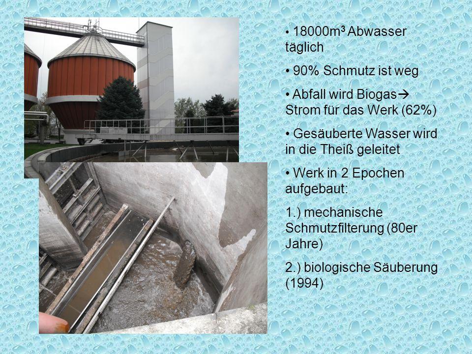 18000m 3 Abwasser täglich 90% Schmutz ist weg Abfall wird Biogas  Strom für das Werk (62%) Gesäuberte Wasser wird in die Theiß geleitet Werk in 2 Epochen aufgebaut: 1.) mechanische Schmutzfilterung (80er Jahre) 2.) biologische Säuberung (1994)