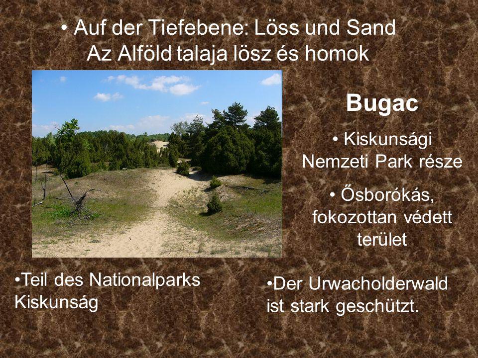 Auf der Tiefebene: Löss und Sand Az Alföld talaja lösz és homok Bugac Kiskunsági Nemzeti Park része Ősborókás, fokozottan védett terület Teil des Nationalparks Kiskunság Der Urwacholderwald ist stark geschützt.