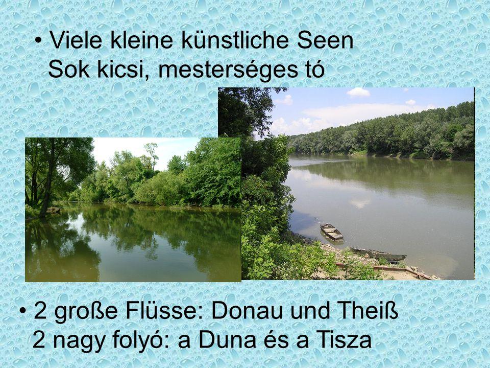Viele kleine künstliche Seen Sok kicsi, mesterséges tó 2 große Flüsse: Donau und Theiß 2 nagy folyó: a Duna és a Tisza