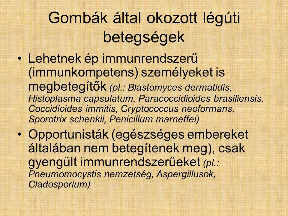 Gombák által okozott légúti betegségek Lehetnek ép immunrendszerű (immunkompetens) személyeket is megbetegítők (pl.: Blastomyces dermatidis, Histoplasma capsulatum, Paracoccidioides brasiliensis, Coccidioides immitis, Cryptococcus neoformans, Sporotrix schenkii, Penicillum marneffei) Opportunisták (egészséges embereket általában nem betegítenek meg), csak gyengült immunrendszerűeket (pl.: Pneumomocystis nemzetség, Aspergillusok, Cladosporium)