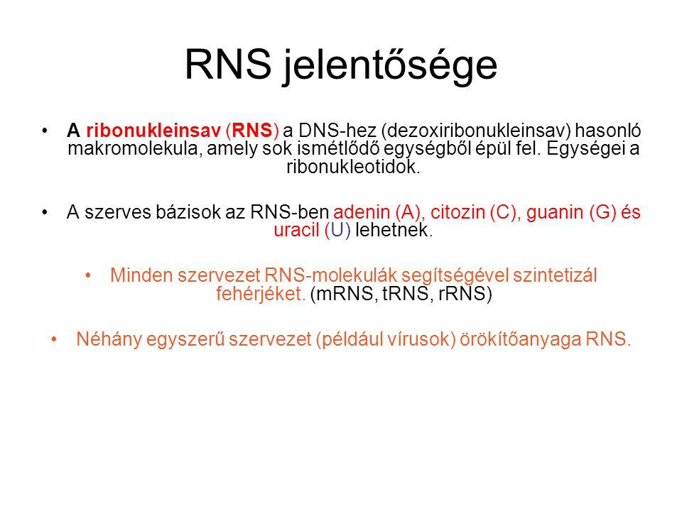 RNS jelentősége A ribonukleinsav (RNS) a DNS-hez (dezoxiribonukleinsav) hasonló makromolekula, amely sok ismétlődő egységből épül fel. Egységei a ribo