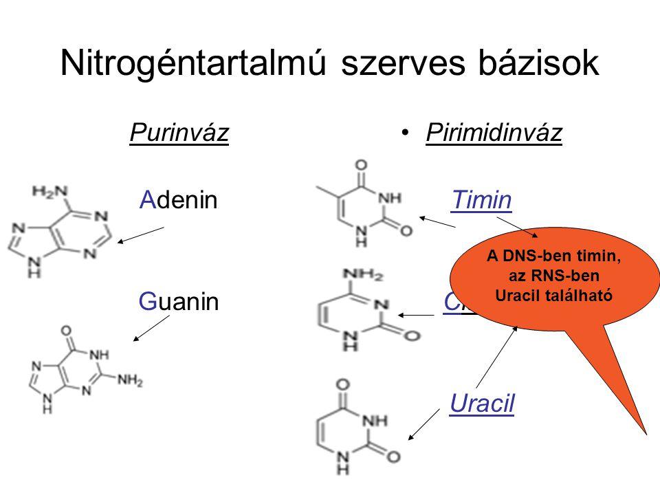 Nitrogéntartalmú szerves bázisok Purinváz Adenin Guanin Pirimidinváz Timin Citozin Uracil A DNS-ben timin, az RNS-ben Uracil található