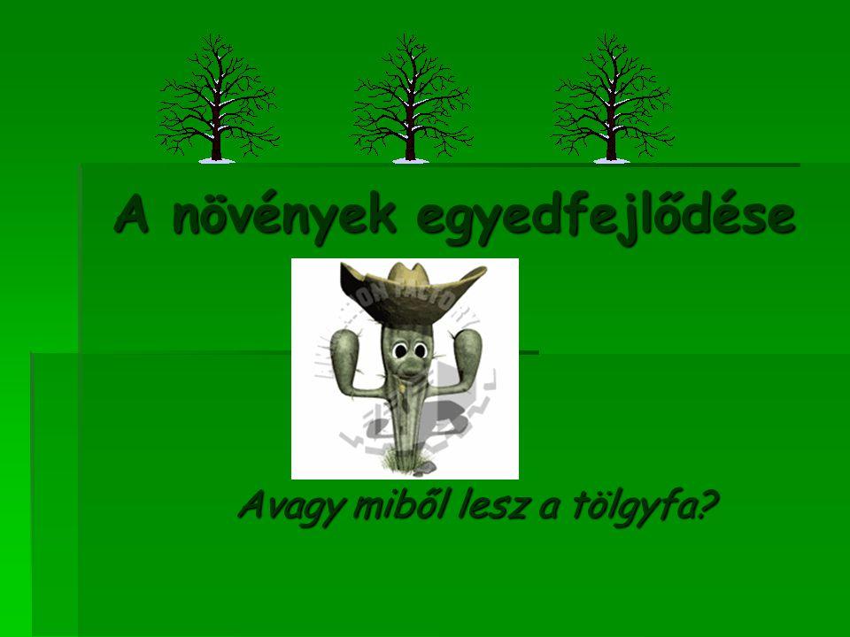 A növények egyedfejlődése Avagy miből lesz a tölgyfa?