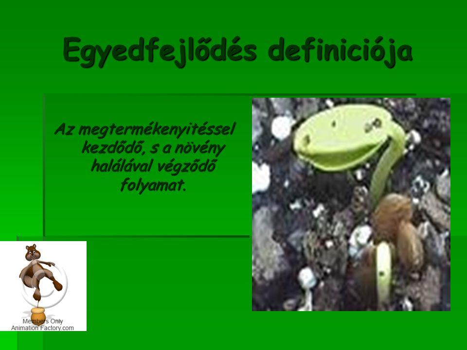 Az egyedfejlődés szakaszai Megtermékenyítés Csírázás/palántaszakasz Vegetatív szakasz Generatív/reproduktív szakasz