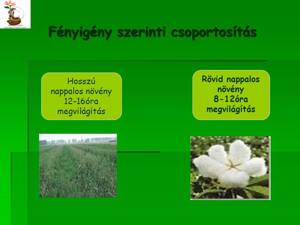 Fényigény szerinti csoportosítás Hosszú nappalos növény 12-16óra megvilágítás Rövid nappalos növény 8-12óra megvilágítás