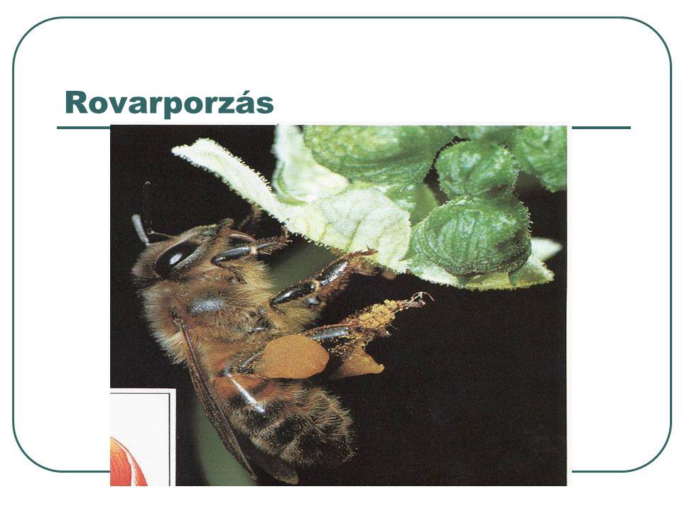 Porzás lehet szél/ és rovarporzás