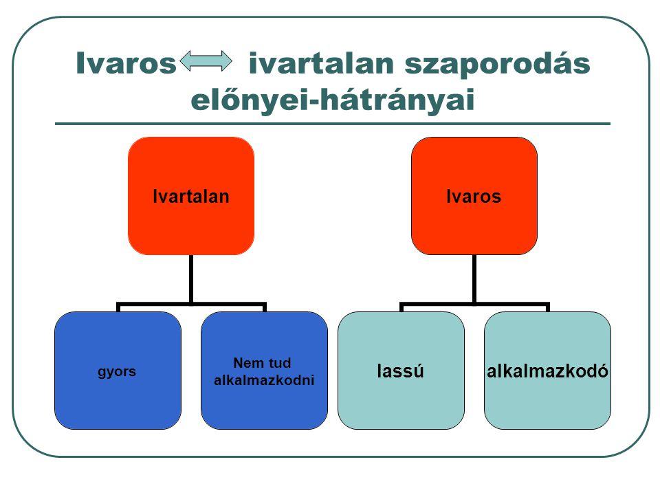 Szaporodás típusai Szaporodás; az egyed önmagához hasonló utódot hoz létre Ivartalan; egy sejtből/ egy növényi szervből jön létre Ivaros; két ivarsejt