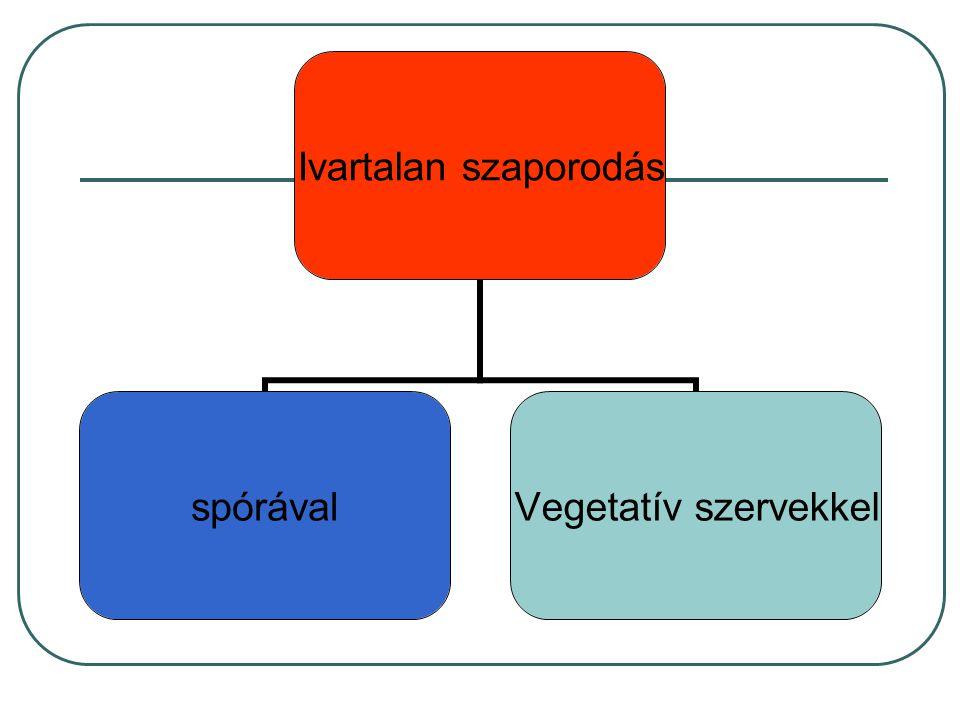 Ivartalan szaporodás spórával Vegetatív szervekkel