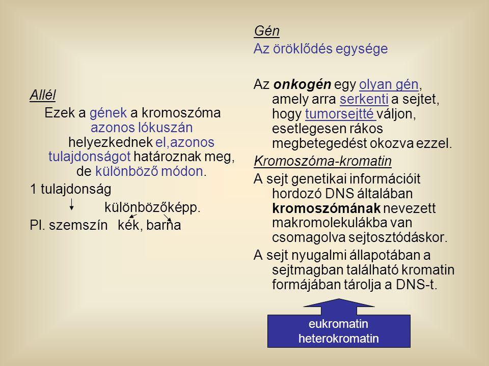 Allél Ezek a gének a kromoszóma azonos lókuszán helyezkednek el,azonos tulajdonságot határoznak meg, de különböző módon. 1 tulajdonság különbözőképp.