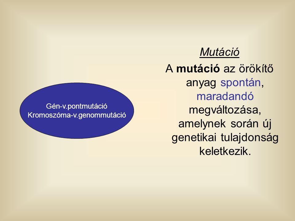 Mutáció A mutáció az örökítő anyag spontán, maradandó megváltozása, amelynek során új genetikai tulajdonság keletkezik. Gén-v.pontmutáció Kromoszóma-v