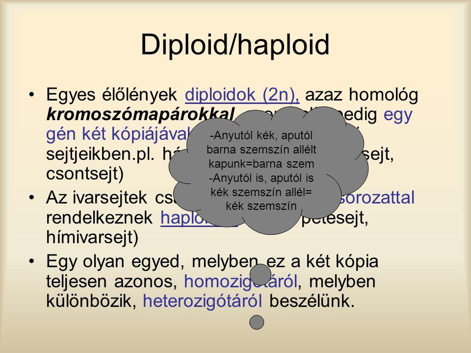 Diploid/haploid Egyes élőlények diploidok (2n), azaz homológ kromoszómapárokkal, azon belül pedig egy gén két kópiájával rendelkeznek a testi sejtjeik
