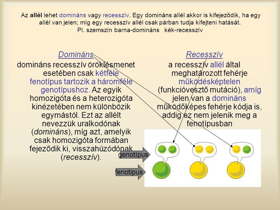 Domináns domináns recesszív öröklésmenet esetében csak kétféle fenotípus tartozik a háromféle genotípushoz. Az egyik homozigóta és a heterozigóta kiné