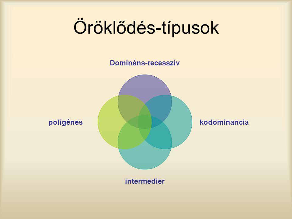 Öröklődés-típusok Domináns-recesszív kodominancia intermedier poligénes