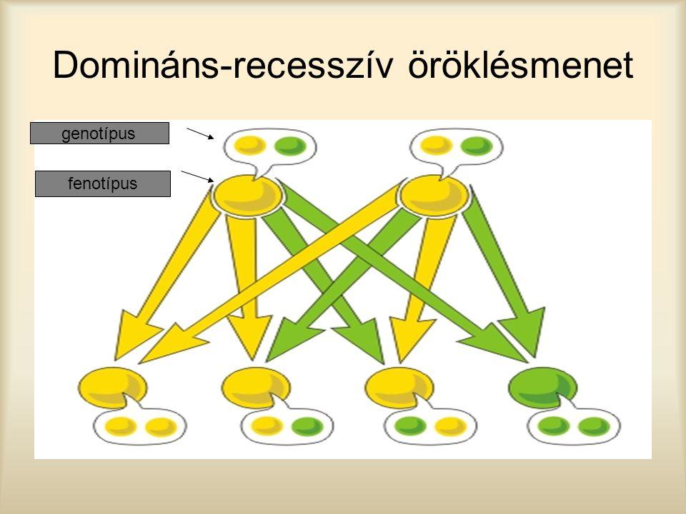 Domináns-recesszív öröklésmenet genotípus fenotípus