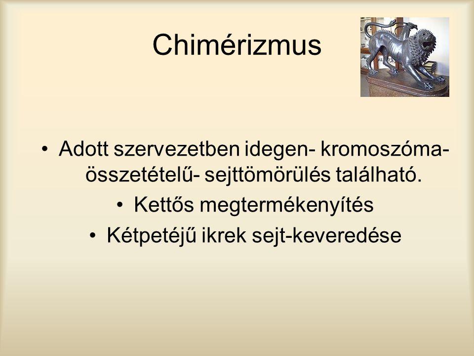 Chimérizmus Adott szervezetben idegen- kromoszóma- összetételű- sejttömörülés található. Kettős megtermékenyítés Kétpetéjű ikrek sejt-keveredése
