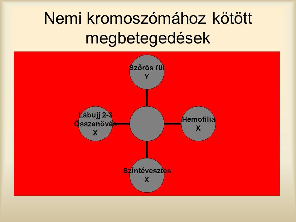 Nemi kromoszómához kötött megbetegedések Szőrös fül Y Hemofilia X Színtévesztés X Lábujj 2-3 Összenövés X