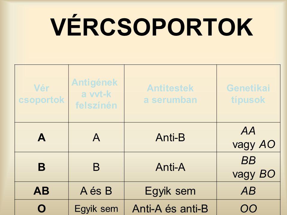VÉRCSOPORTOK Vér csoportok Antigének a vvt-k felszínén Antitestek a serumban Genetikai típusok AAAnti-B AA vagy AO BBAnti-A BB vagy BO ABA és BEgyik s