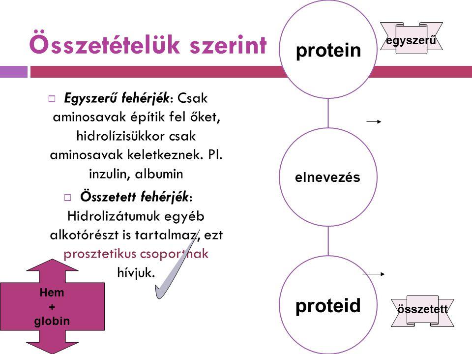 Összetételük szerint  Egyszerű fehérjék: Csak aminosavak építik fel őket, hidrolízisükkor csak aminosavak keletkeznek. Pl. inzulin, albumin  Összete