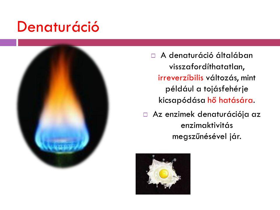 Denaturáció  A denaturáció általában visszafordíthatatlan, irreverzíbilis változás, mint például a tojásfehérje kicsapódása hő hatására.  Az enzimek