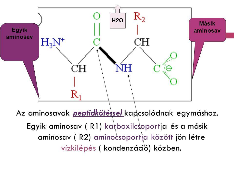 Az aminosavak peptidkötéssel kapcsolódnak egymáshoz. Egyik aminosav ( R1) karboxilcsoportja és a másik aminosav ( R2) aminocsoportja között jön létre