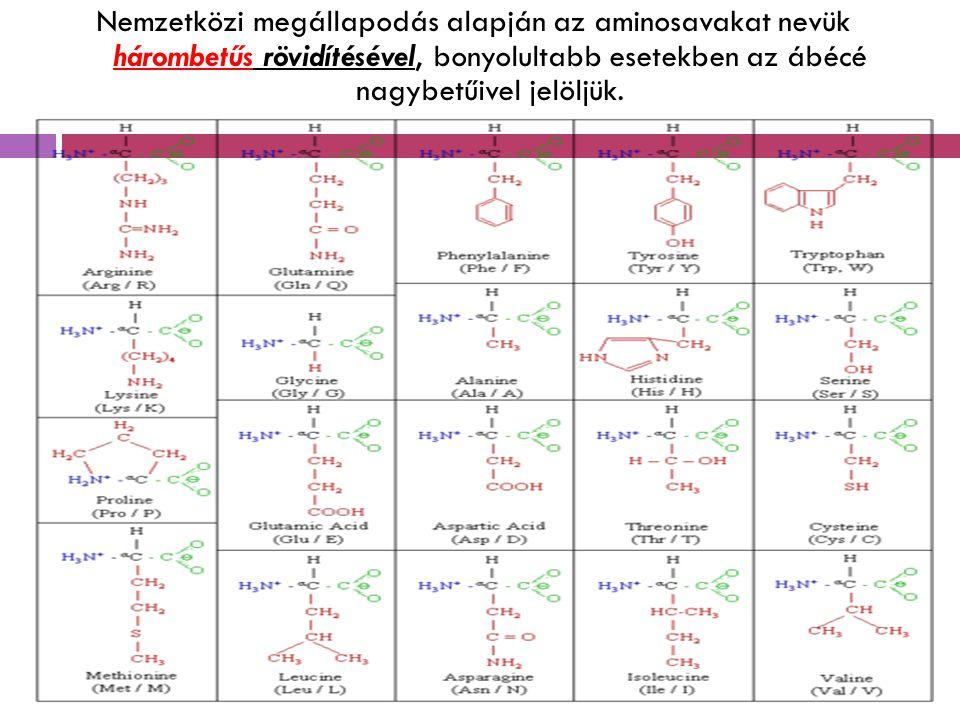 Nemzetközi megállapodás alapján az aminosavakat nevük hárombetűs rövidítésével, bonyolultabb esetekben az ábécé nagybetűivel jelöljük.